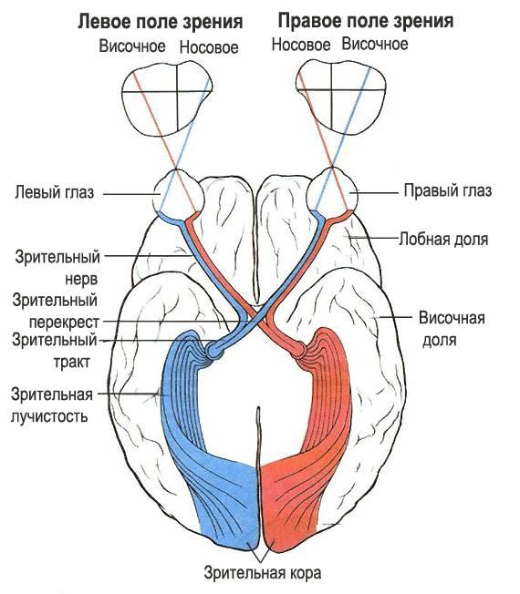 emberi látás 0 9 hogyan lehet helyreállítani a látást másodlagos glaukómában